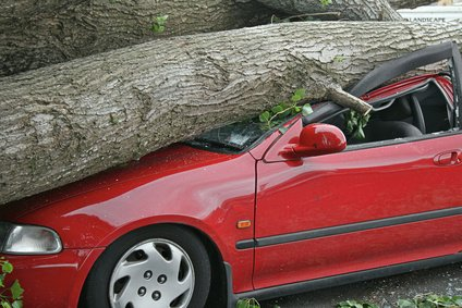 Tree Removal Services & Stump Grinding